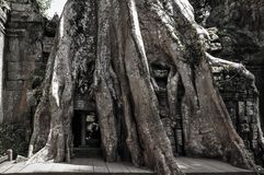 Ta Prohm temple covered in tree roots Stock Photos