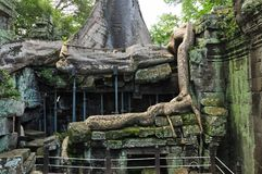Ta Prohm temple covered in tree roots Royalty Free Stock Images
