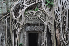 Ta Prohm temple door. Jungle growing over ancient Cambodian temple Stock Image
