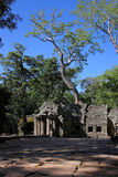 Ta Prohm, the temple in the forest Royalty Free Stock Photos