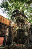 Ta Prohm temple with giant banyan tree. Angkor Wat, Cambodia Stock Image