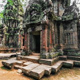 Ta Prohm temple with giant banyan tree at sunset. Angkor Wat, Cambodia Royalty Free Stock Image