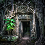 Ta Prohm temple with giant banyan tree at sunset. Angkor Wat, Cambodia Stock Photo