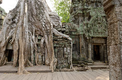 Ta Prohm Temple in jungles of Cambodia Royalty Free Stock Images