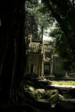 Ta Prohm temple. One of the Angkor temples in Cambodia, close to the city Siem Reap. Not far from the famous Angkor Wat. The temple seems lost in a jungle and Stock Photography