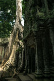Ta Prohm temple. One of the Angkor temples in Cambodia, close to the city Siem Reap. Not far from the famous Angkor Wat. The temple seems lost in a jungle and Stock Photos