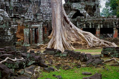 Ta Prohm Temple Ruins Stock Photo