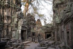 Ta Prohm temple stock images