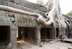 Ta Prohm temple Stock Photos