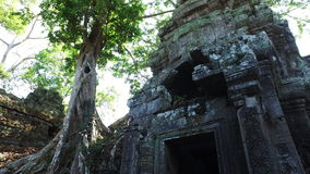 Ta Prohm Temple ruins. Banyan trees groving on walls of Ta Prohm temple ruins at Angkor Wat complex in Cambodia stock video footage