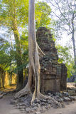 Ta Prohm Temple Ruins Royalty Free Stock Image