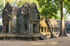Ta Prohm Temple Ruins Stock Photo
