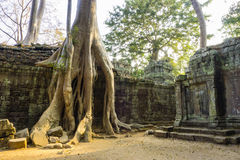 Ta Prohm Temple Ruins Royalty Free Stock Images