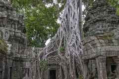 Ta Prohm Temple Siem Reap, Angkor Wat, Cambodia Stock Image