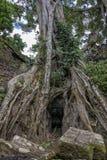 Ta Prohm temple Siem Reap, Angkor Wat, Cambodia Royalty Free Stock Image