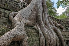 Ta Prohm temple Siem Reap, Angkor Wat, Cambodia Royalty Free Stock Photo