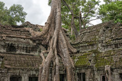 Ta Prohm temple Siem Reap, Angkor Wat, Cambodia Stock Images