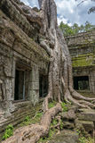 Ta Prohm temple Siem Reap, Angkor Wat, Cambodia Royalty Free Stock Photography