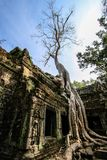 Ta Prohm Royalty Free Stock Images