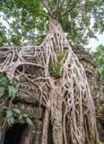Ta Prohm Temple Royalty Free Stock Image