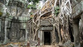 Ta Prohm Temple Siem Reap Cambodia- Ancient Angkor. Temple overtaken by trees in Siem Reap Cambodia Royalty Free Stock Images