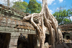 Ta Prohm Temple, Siem Reap, Cambodia Royalty Free Stock Photography