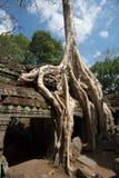 Ta Prohm Temple, Siem Reap, Cambodia Stock Images