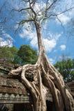 Ta Prohm Temple, Siem Reap, Cambodia Stock Image