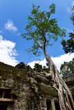 Ta Prohm Temple at Siem Reap, Combodia Royalty Free Stock Photo