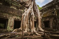 Ta Prohm temple - a symbiosis of roots and stones. Stock Photo