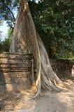Ta Prohm temple Royalty Free Stock Photos