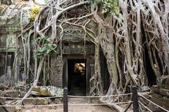 Ta Prohm temple Royalty Free Stock Photo