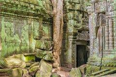 Ta Prohm templet fördärvar bevuxet med träd på Angkor, Siem Royaltyfri Fotografi