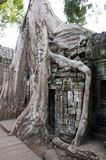 Ta Prohm a 12th century temple in the Banyon style encased in Spung tree roots. Scene around the Angkor Archaeological Park. The site contains the remains of the Royalty Free Stock Image