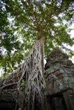 The Ta Prohm tree Stock Photography