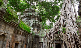 Ta Prohm trees, Angkor Wat Royalty Free Stock Photo