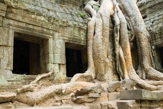 Ta Prohm windows Stock Photography