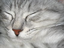 ta sig en tupplur för katt Royaltyfria Foton