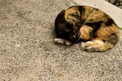 ta sig en tupplur för katt Fotografering för Bildbyråer