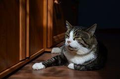 Ta sig en tupplur katt Fotografering för Bildbyråer