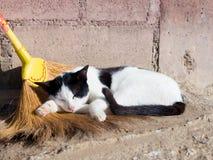 Ta sig en tupplur katt Royaltyfri Fotografi