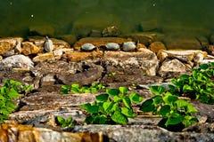 Ta sig en tupplur roliga line upsköldpaddor för tid i Hiroshima Royaltyfri Foto