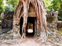 Ta-Som de Tempelwortel van de boom behandelt de muur Royalty-vrije Stock Foto's