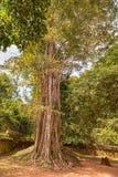 Ta-Som ein kleiner Tempel bei Angkor, Kambodscha, Stockbilder
