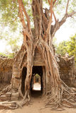 Ta-Som tempel in Angkor Kambodja Royalty-vrije Stock Foto