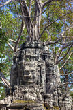 Ta Som temple. Giant stone sculptures overgrown by trees at Ta Som temple in Siem Reap, Cambodia Royalty Free Stock Photos