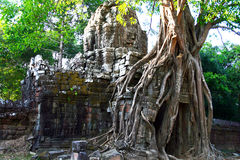 Ta Som Temple,Angkor. Old banyan tree over the stone door from Ta Som temple. Ta Som is a small Buddhist temple dedicated to the father of King Jayavarman VII Stock Images