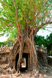 Ta Som Temple, Angkor, Cambodia Royalty Free Stock Photos