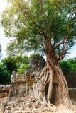 Ta Som temple Royalty Free Stock Photography