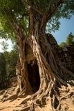 Ta Som Tree and door Stock Image